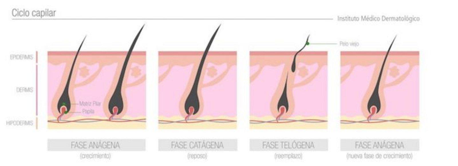 ¿Por qué crece más el pelo de la cabeza que el del resto del cuerpo?