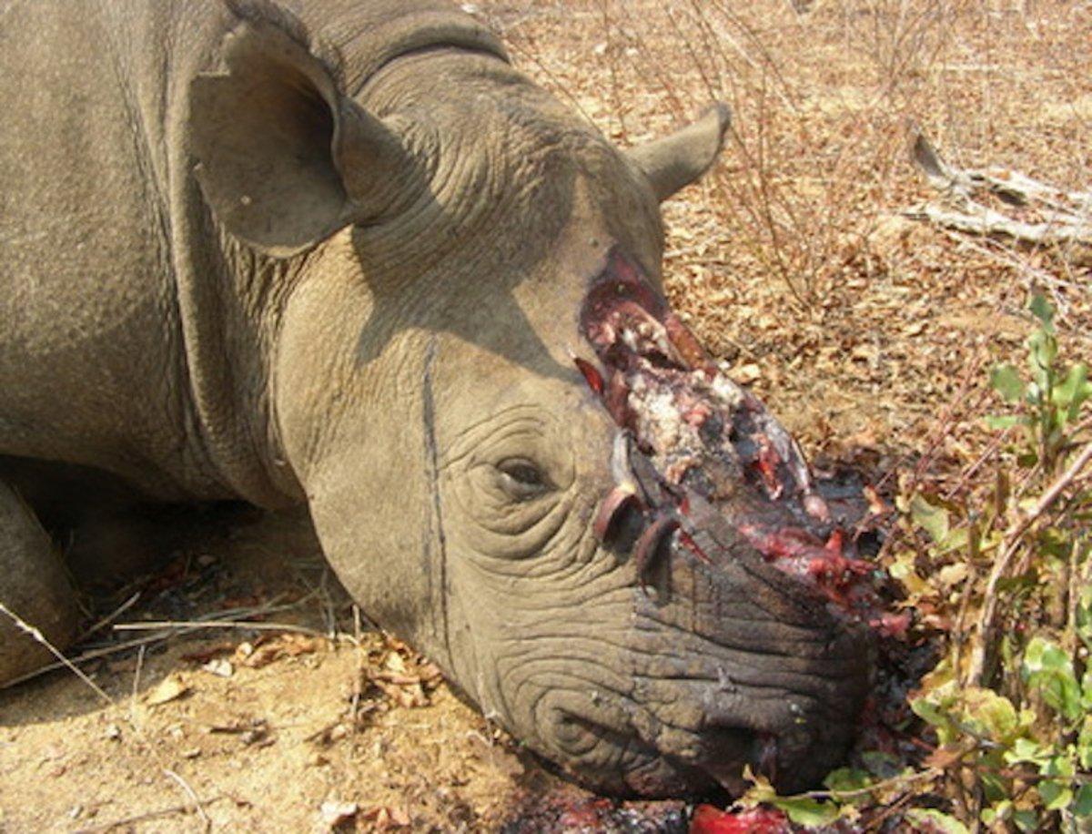 Esta startup tiene un plan loco para acabar con la caza furtiva de rinocerontes