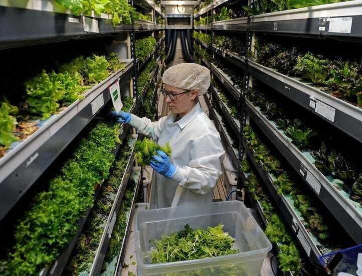 Granjas verticales, la nueva moda en la agricultura para abastecer a más población