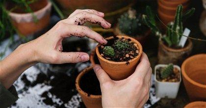 Cuida tus plantas y hazlas florecer con estas 5 aplicaciones para Android